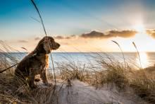 A dog enjoys time on a beach