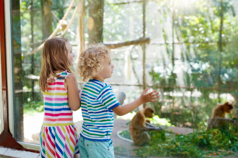 Children enjoy a day at the Lowcountry Zoo